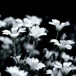 In black in white... by CocoaDesert