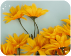 f2u yellow flower aesthetic by bo-tanic