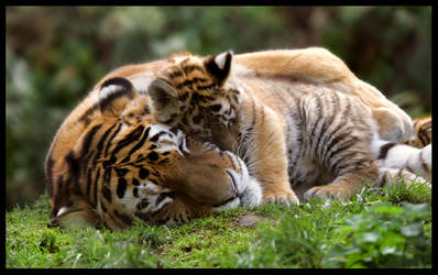 Mother and Cub 3 by Wolfy2k4
