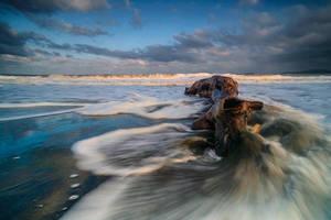 Sea creature by ibasimaikataimeto