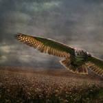 Evening Hunter by Digimaree