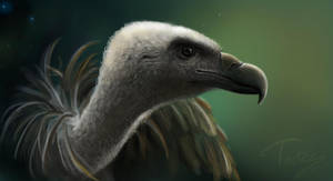 vulture by Trutze