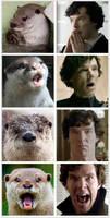 Otter = Sherlock by AcePiltOver