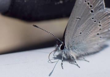 Butterfly by Afriel303