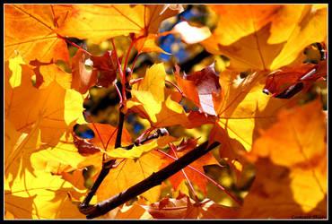 Fall Leaves by Pyrple
