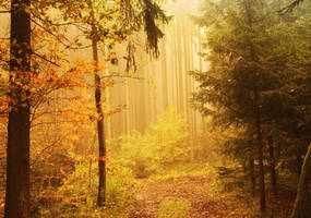Wald am Morgen by Silvermoonswan