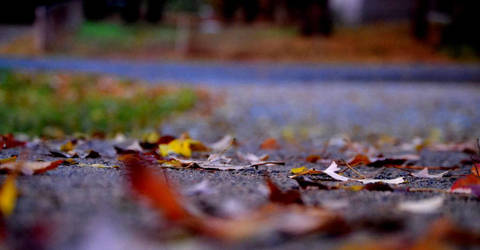 Rolling in the Leaves by Kamera-photography