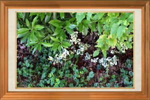 Plant White With Green 1254 (2) by SirIvyPink