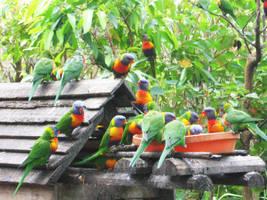 Swarm of Birds by Ishkie