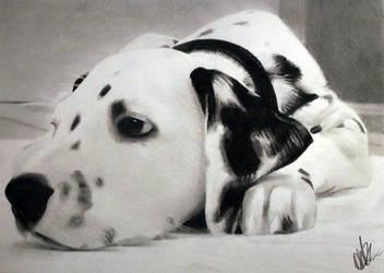 Dalmatian by danUK86