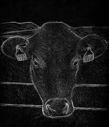 Cow drawing by hg-art