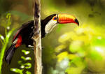 It's a toucan by alicexz