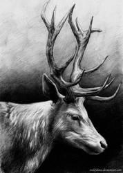 Deer by TeddyLuna
