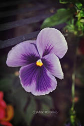 violet by xxliquidrainbowxx