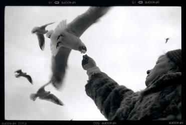 seagulls feeding by RaMiBru
