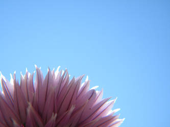 Cloudless Chives by Stock7000