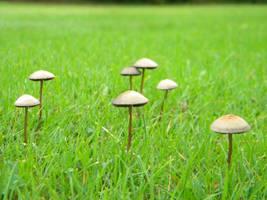 Mushroom Stock 24 by Stock7000
