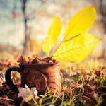 autumn cup by justerZ