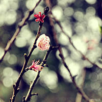 Spring soon by sharkmq
