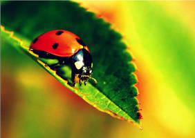 Ladybug by XPeaceXLoveXRawrX