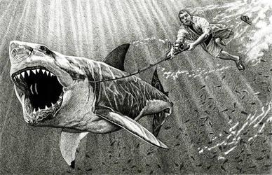 Shark Catch by EricBaize
