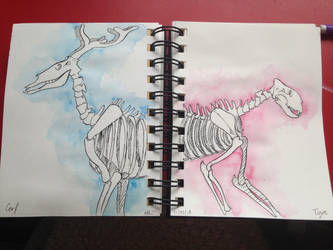 Deer and Tiger skeletons by LaFilleEtoile