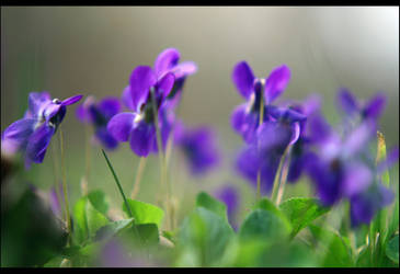 Vivid spring by John77