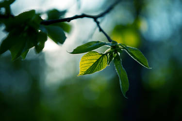 Light GREEN by John77