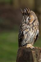 Sleepy bird by linneaphoto