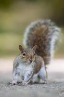 Squirrel by linneaphoto