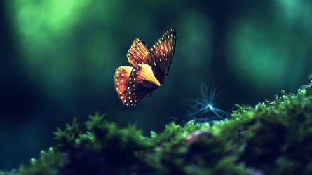 Magic Butterfly by Aurelien-Minozzi