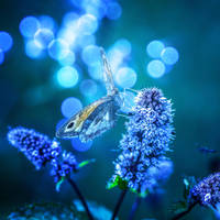 Butterfly by Aurelien-Minozzi