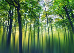 Emerald Forest by Aurelien-Minozzi