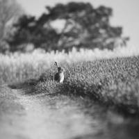 Hare by Aurelien-Minozzi