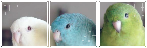 Budgie Divider 2 by WakeMeWhenImDead