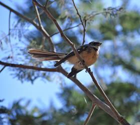 Sticky Beak by mrwinter