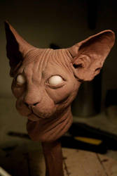Sphynx Cat Bust WIP by TomsCreatures