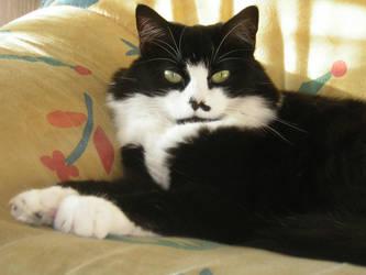 My Cat 2 by crazymars