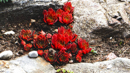 Flowers on the rocks by gintautegitte69