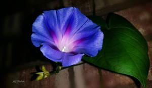 Flower.......0 by gintautegitte69