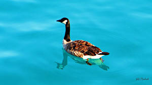 Duck..... by gintautegitte69