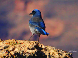 Grand Canyons bird......... by gintautegitte69