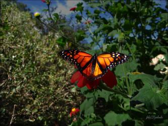 Butterfly...... by gintautegitte69
