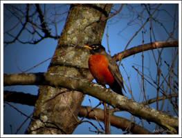 Birds return.......Spring... by gintautegitte69