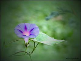 Morning flower. ... by gintautegitte69