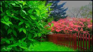 Backyard today..... by gintautegitte69