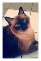 Cat..... by gintautegitte69