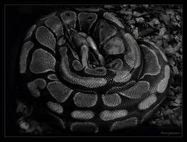 Snake.... by gintautegitte69