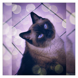 Cat waiting snaks... by gintautegitte69