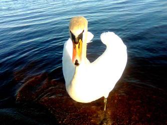 swan by LtMax